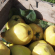 Stock Photo: Yellow pear