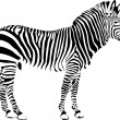 Zebra - vector illustration — Stock Vector