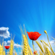Stock Photo: Wheat cones with red poppies against beautiful sky