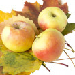 Ripe apples on autumn leaves — Stock Photo