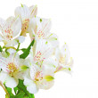 Bouquet of white flowers — Stock Photo #17322317