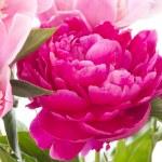 Pink peony — Stock Photo #26423697