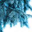 The branches of spruce in frost — Stock Photo