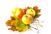 Ripe apples on autumn leaves on white background — Stock Photo