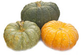 Different varieties of pumpkins on a white background — Stockfoto