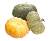 Different varieties of pumpkins on a white background — Stock Photo