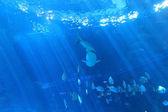 The sight of shark back — Stock Photo