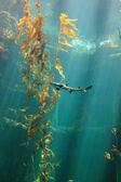 Small shark in the ocean — Stock Photo