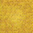 Vector honey combs background - Stock Vector