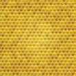 Vector honey combs background — Stockvektor #15405493