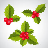 Christmas holly decorations — Stock Vector