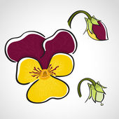 Sketch style flower set - pansy — Stock Vector