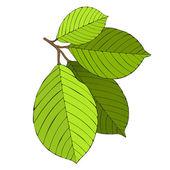 Hand drawn artistic leaves — Stock vektor