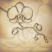 Skizze orchidee hintergrund — Stockvektor