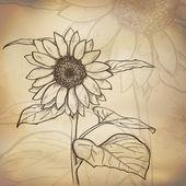 Sketch  sunflower background — Stock Vector