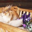 Stock Photo: Light red easter bunny is sitting in wagon full of hay