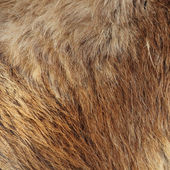 Closeup picture on soft red fur — Stockfoto