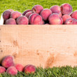 Many peaches in wooden crate — Stock Photo