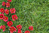 Red flowers with grass — Stock Photo
