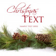 Christmas pine branches — Stockfoto