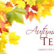 Stock Photo: Autumn Leaves on white