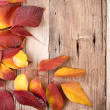 Autumn leaves on wooden plank — Stock Photo