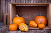 Assorted pumpkins and gourds — Stock Photo