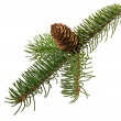 Stock Photo: Branch fir with cone