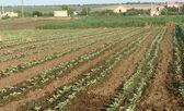 Farming field — Stock Photo