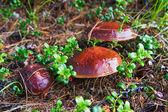 čerstvé houby — Stock fotografie