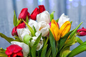 tulips2 — Stock Photo