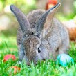 Little grey bunny playing in the meadow with the easter eggs — Stock Photo #32153735