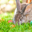 Wallpaper of a little bunny smiling with Easter eggs and spring  — Stock Photo