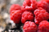 Sweet, fresh, organic raspberry fruit closeup view — Stock Photo