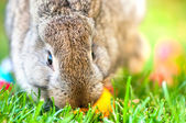 Close-up of easter bunny with colorful eggs and green background — Stock Photo