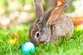 Easter little rabbit smiling in green grass with leaves, flowers — Stock Photo