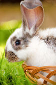Close-up of bunny, easter and holidays — Stock Photo