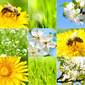 Collection of summer and spring wallpapers — Stock Photo