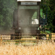 Combine Harvesting  yellow full Grain Crops, late summer harvest — Stock Photo