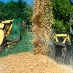 Grain harvester combine discharging grain load — Stock Photo #32177727
