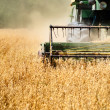 Harvesting machine in wheat crops — Stock Photo