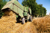 Green vintage combine harvesting crops of wheat — Stock Photo