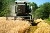 Grain Harvester Combine collecting from the wheat crops — Stock Photo