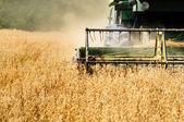 Macchina raccolta in colture di frumento — Foto Stock