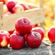 Stock Photo: Red group of apples form autumn golden harvest. Organic fruits and colorful fall background