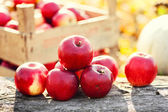 Red group of apples form autumn golden harvest. Organic fruits and colorful fall background — Foto Stock