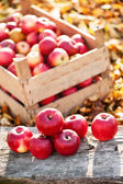 Fresh organic red apples from autumn harvest at local farm — Stock Photo