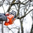 Stock Photo: Lumberjack worker cutting branches from tree for fire wood wit