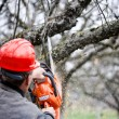 Adult cutting trees with chainsaw and tools — Foto de Stock