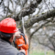 Adult cutting trees with chainsaw and tools — Lizenzfreies Foto